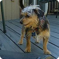 Adopt A Pet :: Annie Adopted - Nine Mile Falls, WA