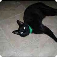 Adopt A Pet :: Susie Spot - Hamburg, NY