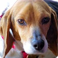Adopt A Pet :: Elise - Novi, MI