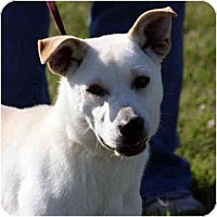 Adopt A Pet :: Ollie 2 - kennebunkport, ME