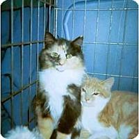 Adopt A Pet :: Phantom - Delmont, PA