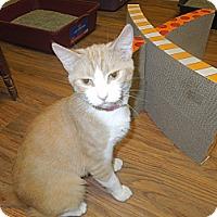 Adopt A Pet :: Blaire - Medina, OH