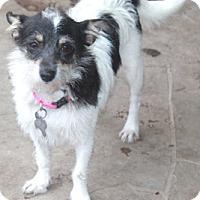 Adopt A Pet :: Bubbles-MEET HER!! - Norwalk, CT