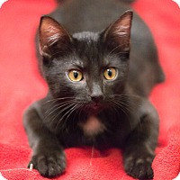 Adopt A Pet :: Expresso - Chicago, IL