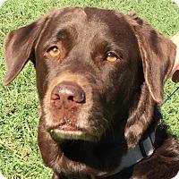 Adopt A Pet :: Mona - Orlando, FL