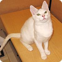 Adopt A Pet :: Lola - Colmar, PA