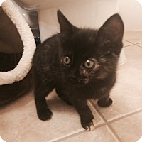 Adopt A Pet :: Aster - Stafford, VA