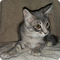 Adopt A Pet :: Cordelia2 - North Highlands, CA
