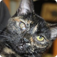 Adopt A Pet :: Cabernet - Hamilton, ON