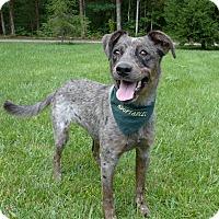 Adopt A Pet :: Lana - Mocksville, NC