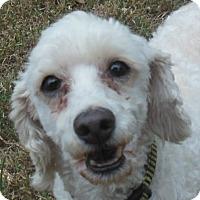 Adopt A Pet :: Ori - MINNEAPOLIS, KS