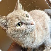 Adopt A Pet :: Bailey - Hanna City, IL