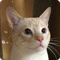 Adopt A Pet :: Samurai - Winchester, CA