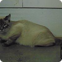 Adopt A Pet :: Jack - Jackson, MO