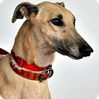 Adopt A Pet :: Jaseman - Thornton, CO