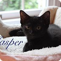 Adopt A Pet :: Jasper - Jackson, NJ