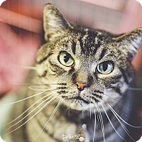 Adopt A Pet :: Buzzy - New Richmond,, WI