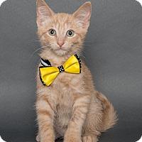 Adopt A Pet :: Vic - Wyandotte, MI