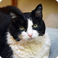 Adopt A Pet :: Artemis - Norwalk, CT