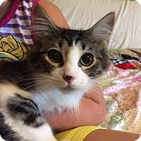 Adopt A Pet :: HERRING - Putnam, CT