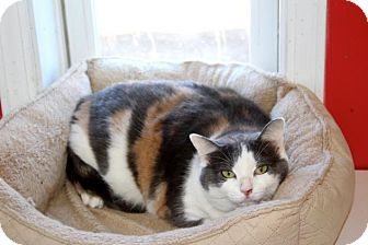 Calico Cat for adoption in McKenzie, Tennessee - Willow