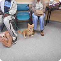 Adopt A Pet :: BEAR - Louisville, KY