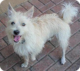 Terrier (Unknown Type, Medium) Dog for adoption in Jupiter, Florida - Toto