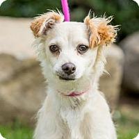 Adopt A Pet :: Poussey - San Diego, CA