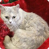 Adopt A Pet :: Wanda - Greensboro, NC