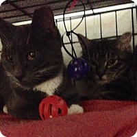 Adopt A Pet :: Buffy and Fluffy - Brooklyn, NY