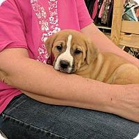 Adopt A Pet :: Grace - Covington, TN