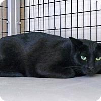 Adopt A Pet :: Leto - Victor, NY