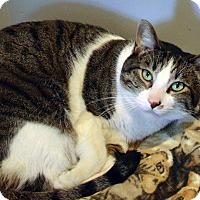 Adopt A Pet :: Oakley - Lincoln, NE