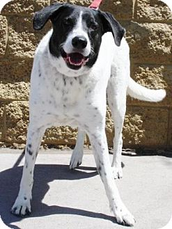 Border Collie Mix Dog for adoption in Gilbert, Arizona - Duke