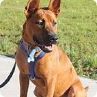 Adopt A Pet :: TJ - Miami, FL