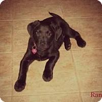 Adopt A Pet :: Randi - Hancock, MI