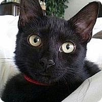Adopt A Pet :: Ruby - Seminole, FL
