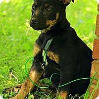 Adopt A Pet :: Margo - Brattleboro, VT