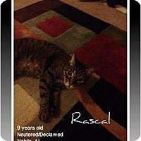Adopt A Pet :: Rascal - Mobile, AL