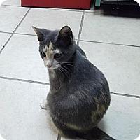 Adopt A Pet :: Dezi - Byron Center, MI