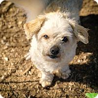 Adopt A Pet :: Gadget - Temecula, CA