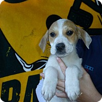 Adopt A Pet :: Zoey - Oviedo, FL