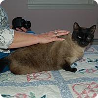 Adopt A Pet :: Bentley - Great Mills, MD