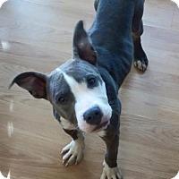 Adopt A Pet :: Callie - Baton Rouge, LA