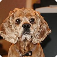Adopt A Pet :: Athena - Santa Barbara, CA