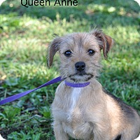 Adopt A Pet :: Queen Anne - Barnesville, GA