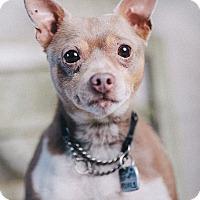 Adopt A Pet :: Jojo - Portland, OR