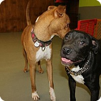 Adopt A Pet :: Sammy - Eugene, OR