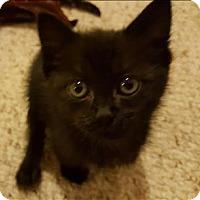 Adopt A Pet :: Gatsby - Sherwood, OR