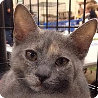 Adopt A Pet :: Gouda - Gainesville, FL